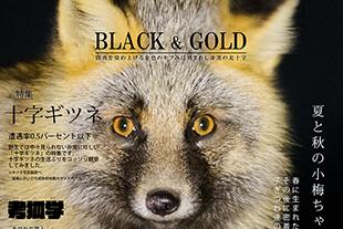 世界初の十字キツネ写真集「キツネ界報 Vol.4」通販開始です!のイメージ