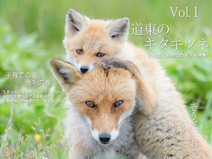 キタキツネ写真集「キツネ界報 Vol.1」通販開始しました!のイメージ