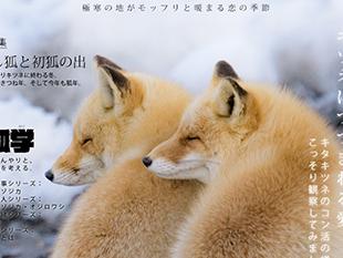 キタキツネ写真集「キツネ界報 Vol.2」通販開始しました!のイメージ