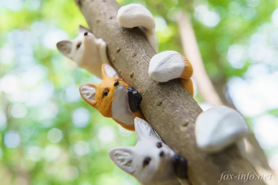 くるキツネと木の枝