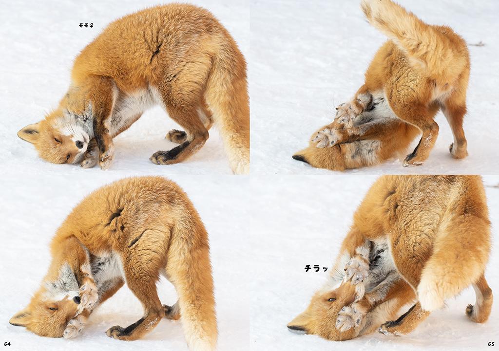 キタキツネ写真集「なまらめんこい!北きつね牧場」-冬の北きつね牧場編-
