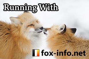 fox-info.net