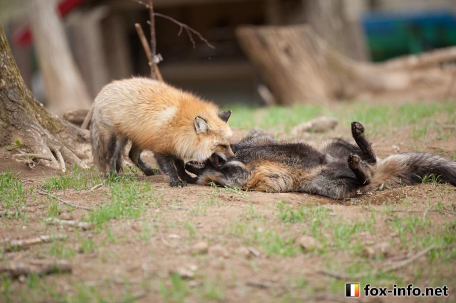 20140505_110753_foxinfonet