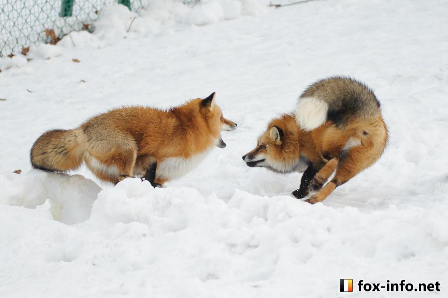 20141229_154823_foxinfonet